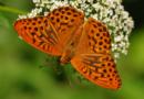 Hledejte pražské motýly