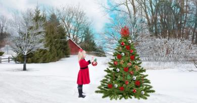 ilustrační obrázek - advent, vánoční strom