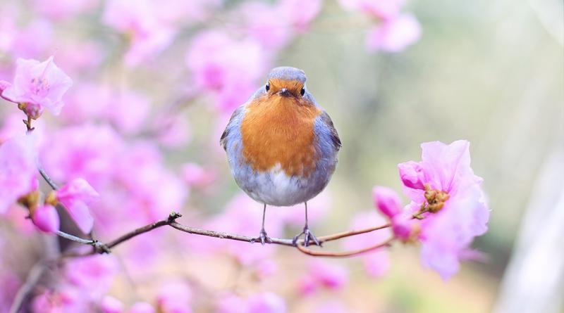 ilustrační - ptáček