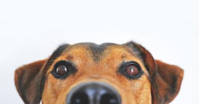 poplatek za psy