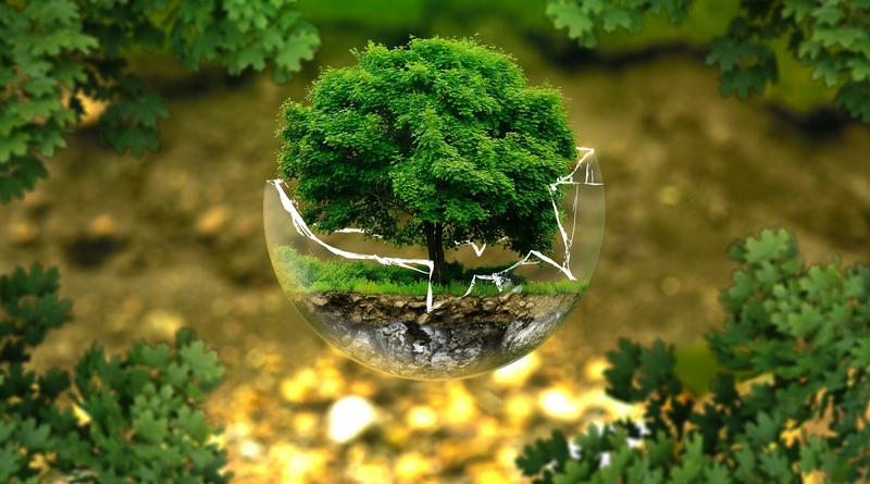ilustrační - strom sázíme budoucnost
